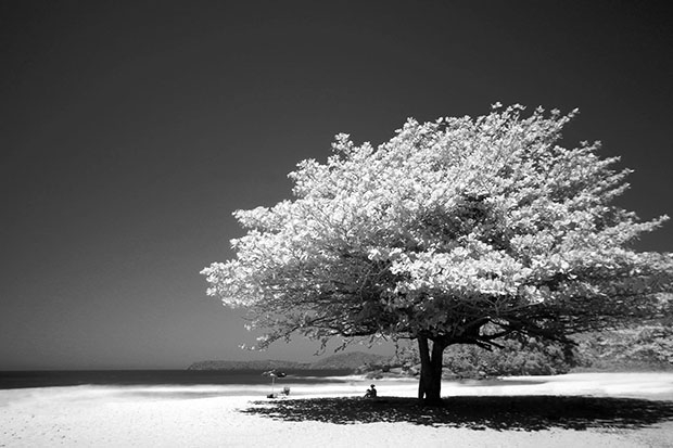 Grayscale photograph of a large tree on a beach, with the sea in the distance
